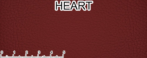 Heart Top Grain Leather